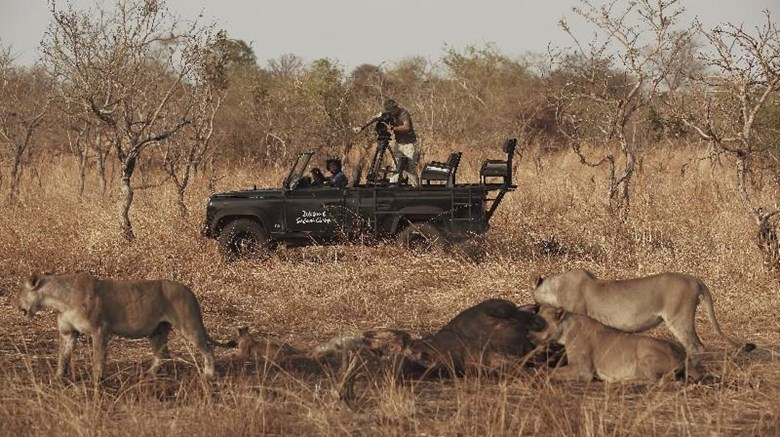 "Zikomo Safari Camp Other. Images powered by <a href='http://web.iceportal.com'  target=""_blank"">Ice Portal</a>."