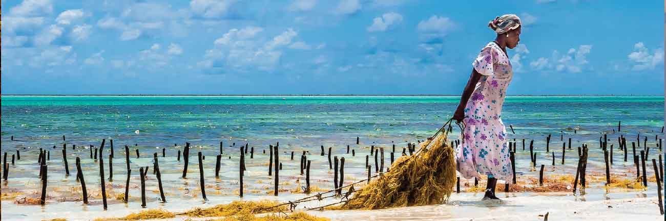 Taking in Zanzibar's Wild East Coast