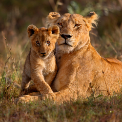 <p>Helping to protect Africa's wildlife makes for an unforgettable experience. // © 2015 iStock</p><p>Feature image (above): Victoria Falls is a great...