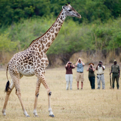 <p>Guests will get a close look at wildlife with the operator. // © 2015 Rothschild Safaris</p><p>Feature image (above): Rothschild Safaris knows when...