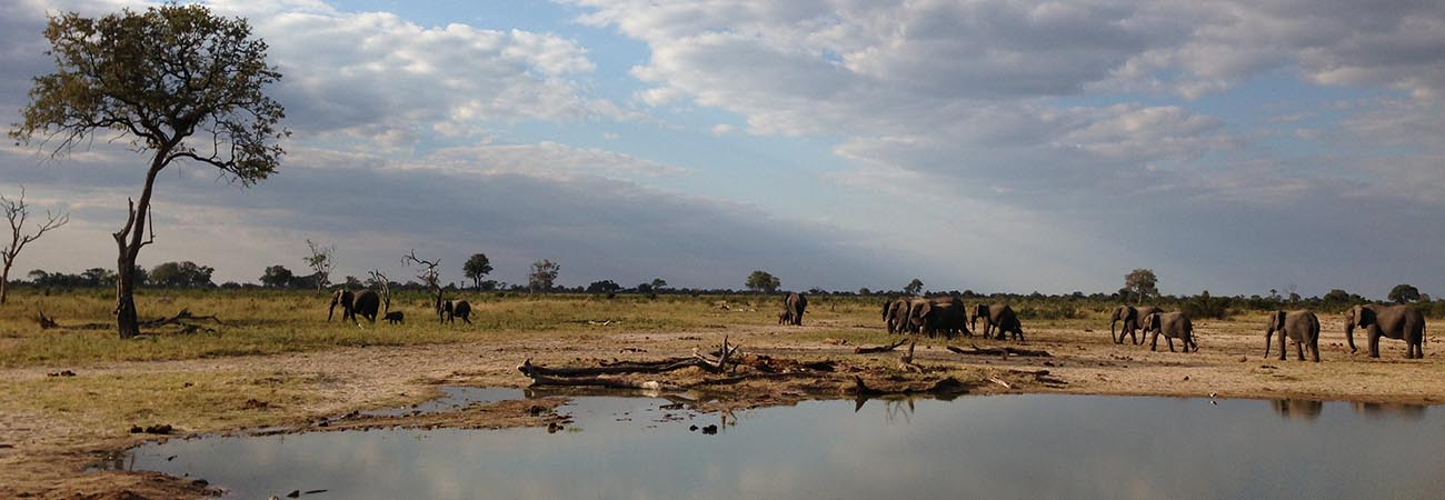 3 Top Luxury Safaris in Zimbabwe