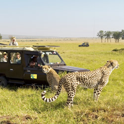 <p>A safari tour with Abercrombie & Kent // © 2015 Mindy Poder</p><p>Feature image (above): Zebras survive a crossing of the Mara River, the site...
