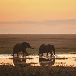 Explore South Africa at your own pace with a safari from African Travel, Inc. // © 2016 iStock