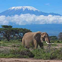 Agents will visit Amboseli National Park, which is located at the foot of Mount Kilimanjaro. // © 2016 United Travel Group