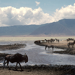 See the Ngorongoro Crater in Tanzania during this eight-day fam. // © 2016 iStock