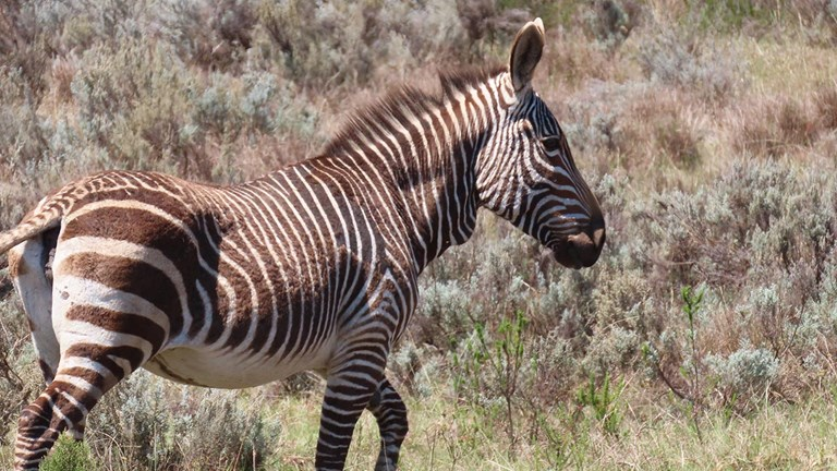 Zebras are among animals frequently sighted in the reserve.