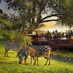 The Royal Livingstone's unfenced location adjacent to Victoria Falls is also home to wild animals including zebras and impalas. // © 2013 The Royal...