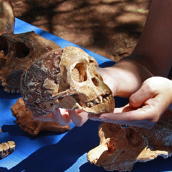 The Cradle of Humankind in South Africa is known for the human fossils found there. // © Palaeo Tours