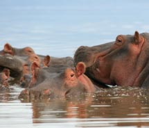 Walk through a safari in Murchison Falls National Park in Uganda // © 2012 Thinkstock