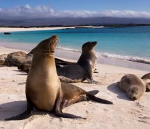 South America: The new Columbia & Ecuador 11-day vacation from Avanti combines the two countries with a Galapagos Islands small ship cruise...