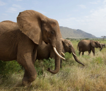 G Adventures has launched an expanded lineup for 2013, including a 14-day Cultural Sri Lanka trip that includes visits to an elephant sanctuary and a...