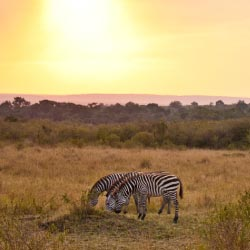 The Africa Adventure Company's new 2013 offerings focus on environmentally conscious lodging and include tours in Namibia, South Africa, Kenya,...
