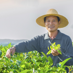 <p>Teas from the Yunnan region are considered to be some of the finest in the world. // © 2014 Thinkstock / Bartlomieji Magierowsk</p><p>Feature image...