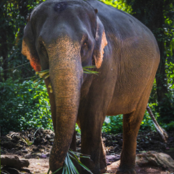 "Koh Chang literally translates to ""Elephant Island."" // © 2014 Thinkstock"