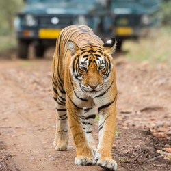 <p>Corbett National Park is one of the best places to spot a Bengal tiger. // © 2015 iStock</p><p>Feature image (above): The Gir forest in Gujarat is...