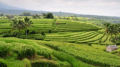 Fam: Escape to Bali With Chinatour