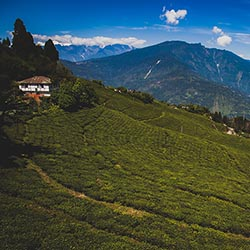 Travelers will visit the Indian state of Sikkim. // © 2017 iStock