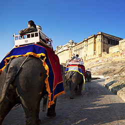 <p>Ride an elephant in Jaipur, India. // © 2016 iStock</p><div></div>