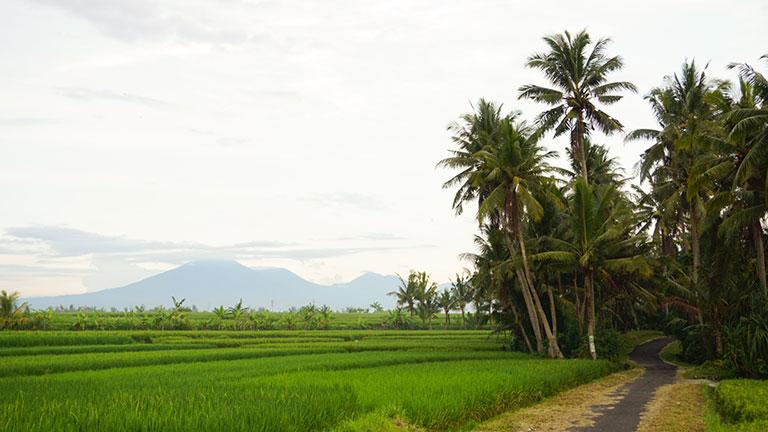 Coconut Corner Boutique Hotel & Retreats offers pristine views of Bali.