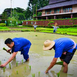 <p>A new promotional campaign highlighting Thai culture aims to increase tourism to Thailand. // © 2015 Tourism Authority of Thailand</p><p>Feature...