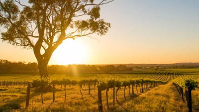 An Ideal Travel Itinerary to South Australia