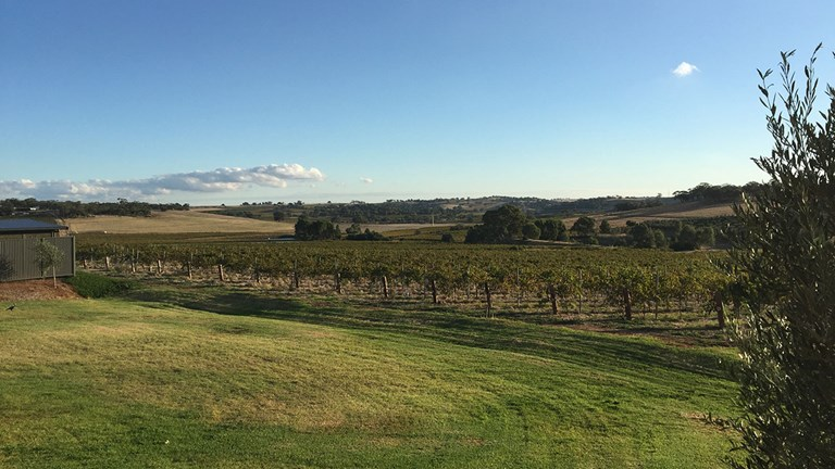 The view of Barossa Valley from Appellation