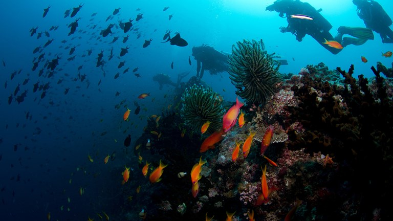 Coral reef rehabilitation is a top priority for several resorts in the Maldives.