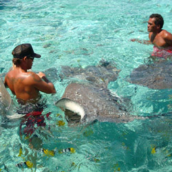 <p>Clients can play with stingrays while vacationing in Bora Bora. // © 2015 Joelle Arriola</p><p>Feature image (above): Classic Vacations product...