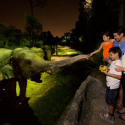 <p>Night Safari is a park for noctural animals. // © 2017 Singapore Tourism Board</p><p>Feature image (above): In Singapore, clients will find...