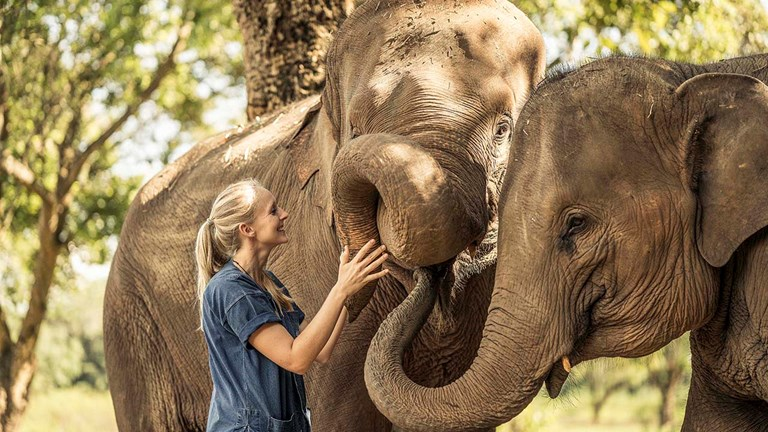 Guests at the property have opportunities to interact with elephants at the on-site Dara Elephant Camp.