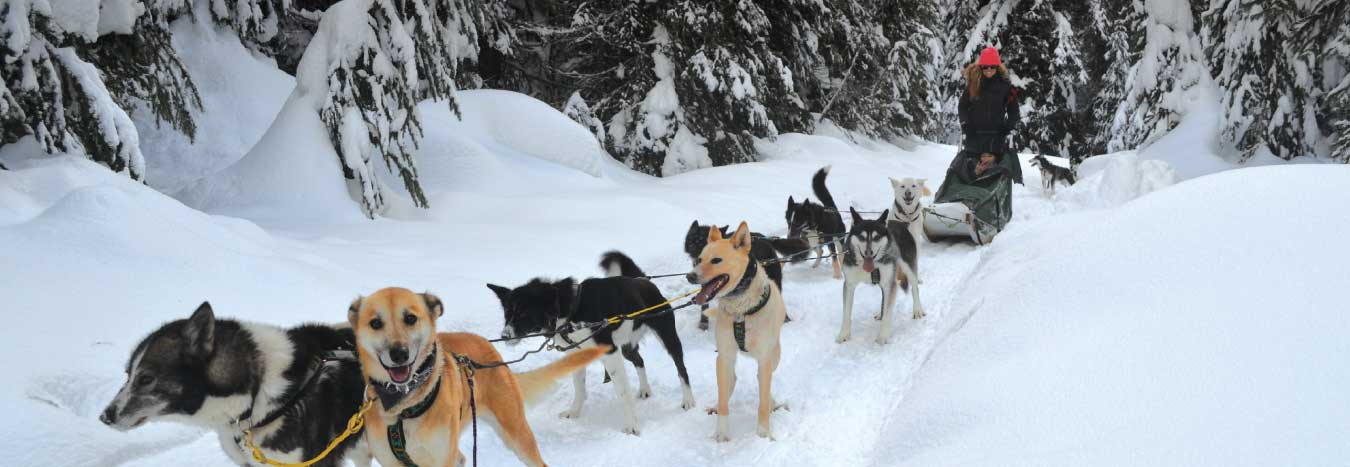 Driving Your Own Dog Sled