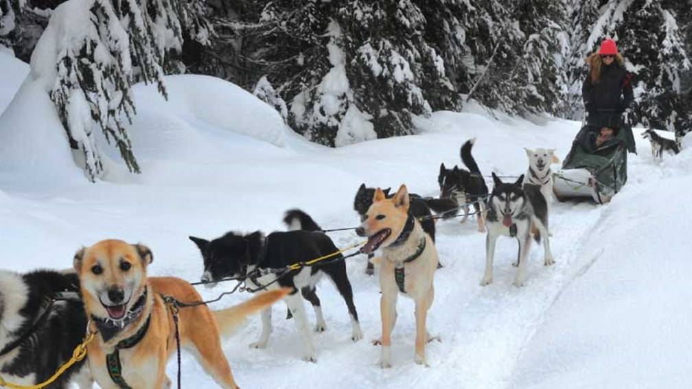 Mountain Man Dog Sled Adventures encourages guests to participate by driving their own sled. // © 2013 Mindy Poder 2