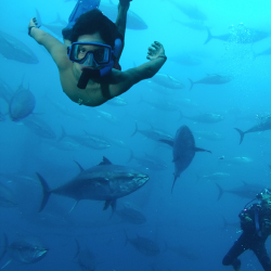 <p>Spain is one of the few places visitors can snorkel surrounded by tuna. // © 2015 Titanium Tours/iStock</p><p>Feature image (above): Trekking in...