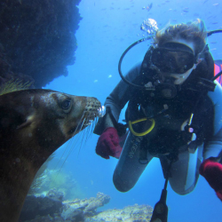 <p>Scuba dive with sea lions in the Galapagos. // © 2016 Loreal Shea</p><p>Feature image (above): The Andes Mountains rewards climbers with incredible...