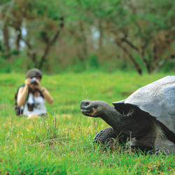 <p>Cruisers have the chance to see giant tortoises in their natural habitat. // © 2017 Walt Denson</p><p>Feature image (above): Lindblad has been...