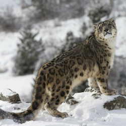 <p>Search for endangered snow leopards on a 13-day tour in India. // © 2017 andBeyond</p><p>Feature image (above): Millennials can travel to Peru in...