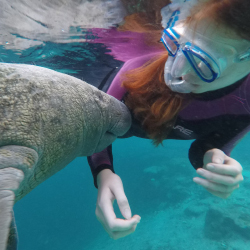 <p>Water is clearer in the winter, but clients are likely to see manatees in warmer months too. // © 2017 Plantation Adventure Center</p><p>Feature...