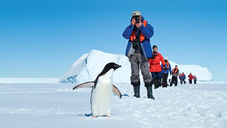 On Antarctica, there are 12 million resident penguins compared about 4,000 resident humans (in the summer) and 1,000 resident humans (during winter).
