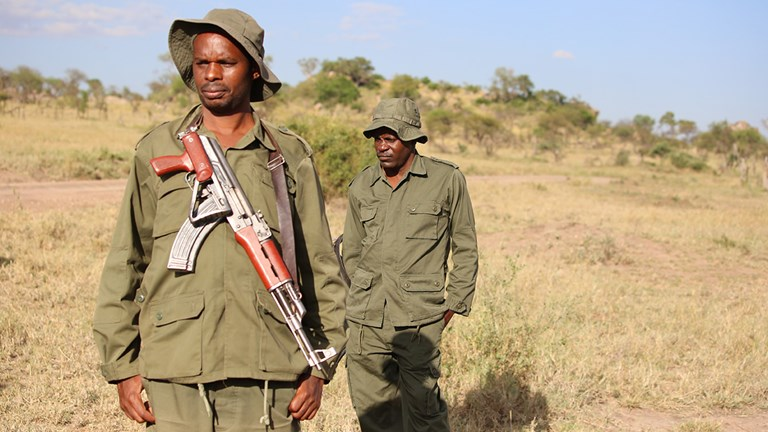 Armed park rangers ensure the group's safety as they walk through the Serengeti.