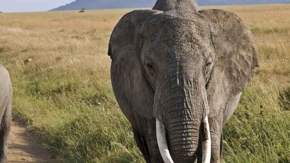 Damaraland is home to desert-adapted species, including elephants. // © 2014 Thinkstock 2