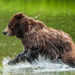 A wild bear sighting with Pack Creek Outfitters // © 2012 Pack Creek Outfitters