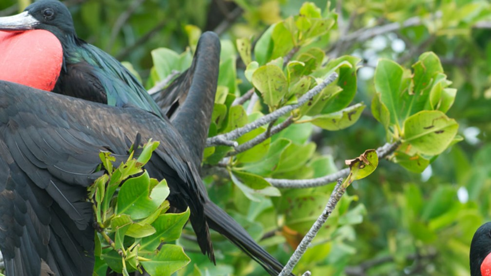 The Best Spots for Birdwatching in the Caribbean
