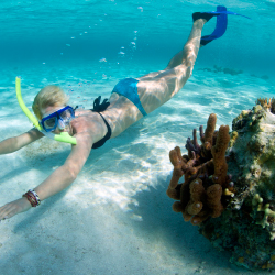 <p>Below the surface, Ambergris Caye is home to many species of marine life. // © 2015 iStock</p><p>Feature image (above): Belize is home to the...