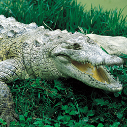 <p>Visitors to Lago Enriquillo are likely to spot American crocodiles. // © 2014 Dominican Republic Ministry of Tourism</p><p>Feature image (above):...
