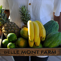 <p>Guests an gather their own fruits and vegetables at Belle Mont Farm on St. Kitts. // © 2017 Belle Mont Farm</p><p>Feature image (above): Enjoy a...