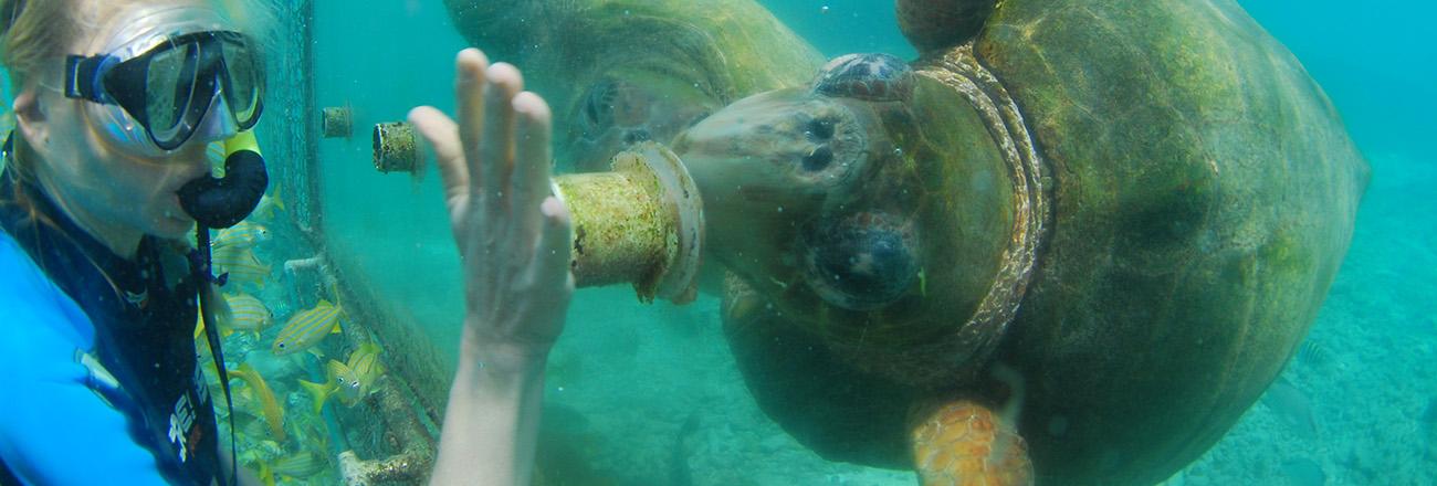 Caribbean Sea Creatures: Meet And Feed Marine Animals In Curacao