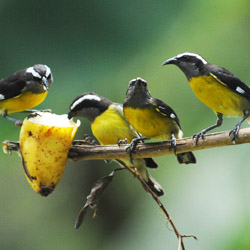 <p>Visitors to Tobago's Grafton Caledonia Wildlife Bird Sanctuary can see indigenous birds up-close during daily bird feedings. // © 2014 Trinidad...