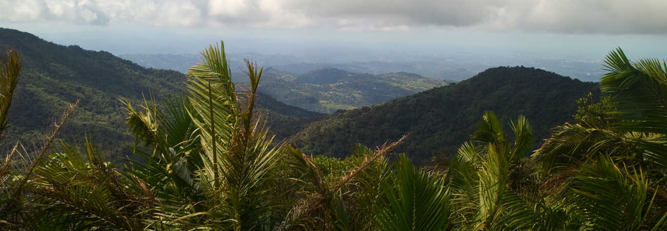 Touring El Yunque National Forest