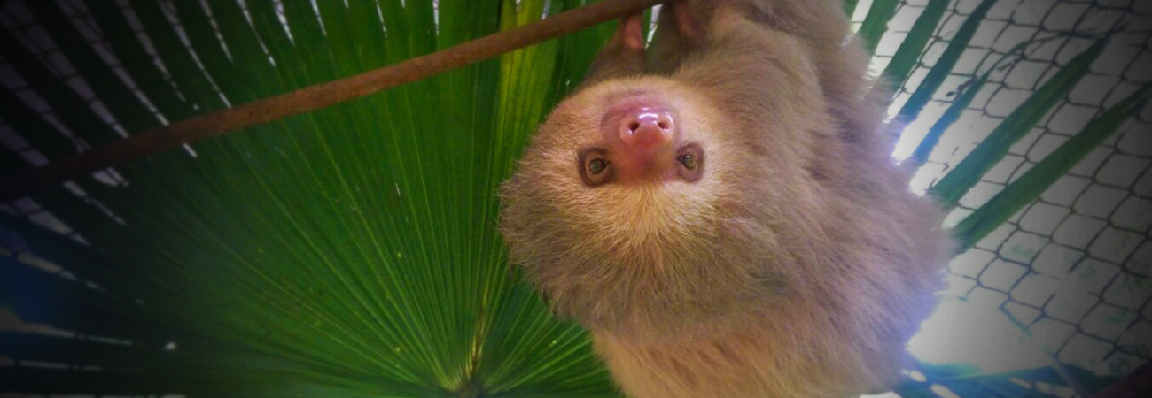 See Sloths, Monkeys and More at This Costa Rica Sanctuary