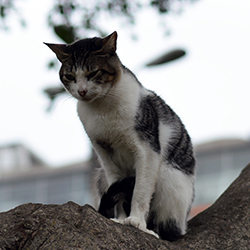 <p>Hang out with more than 100 cats at Parque Kennedy. // © 2015 Valerie Chen</p><p>Feature image (above): Miraflores is one of more than 40 districts...